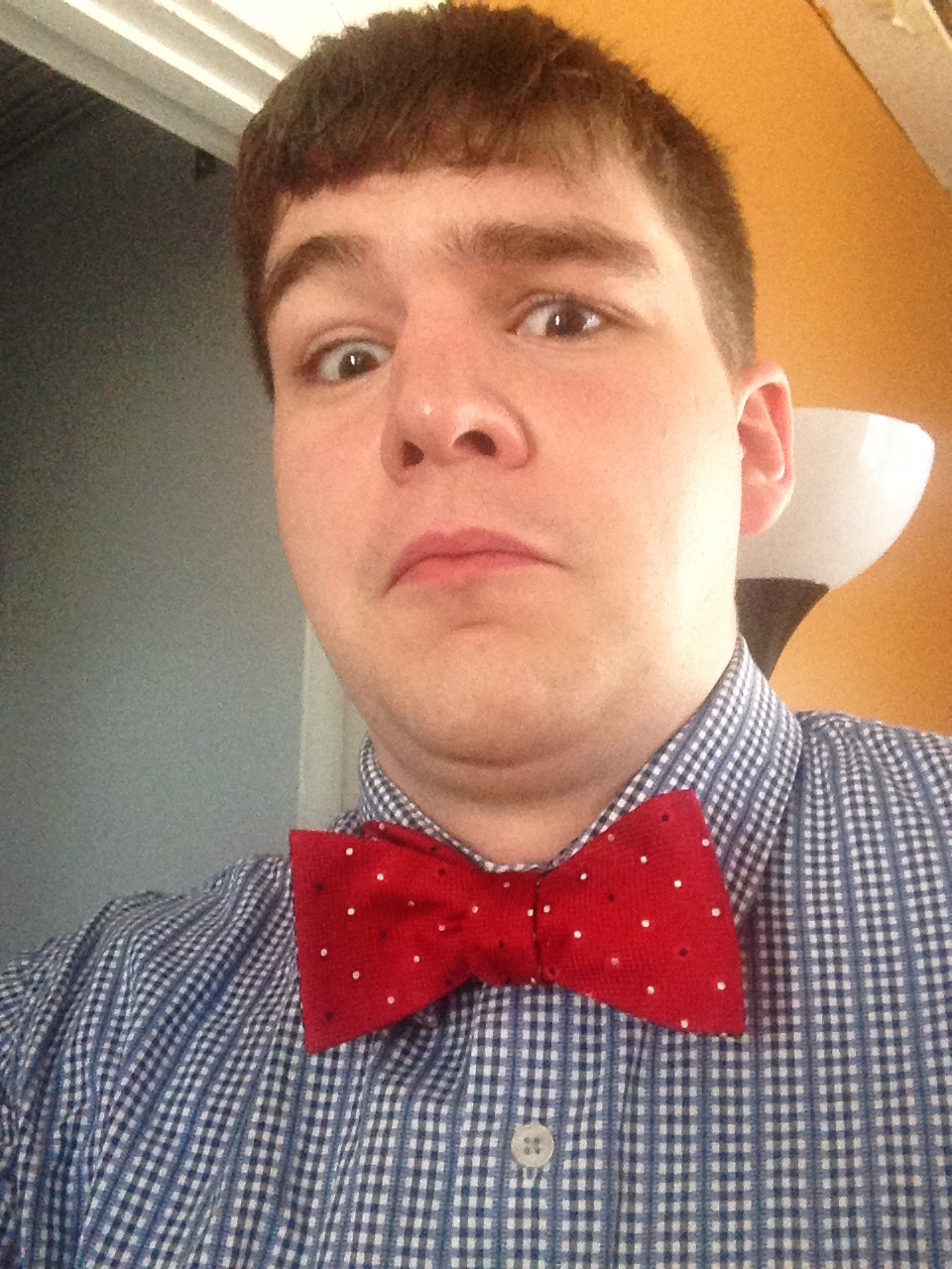 Cannon wearing a bowtie