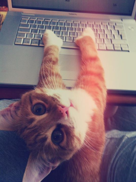 laptopcat